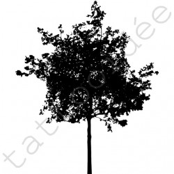 Drzewo 08