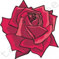 Róża amarantowa
