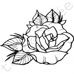 Róża 04