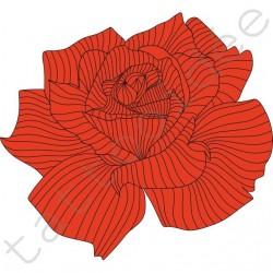 Róża w paski