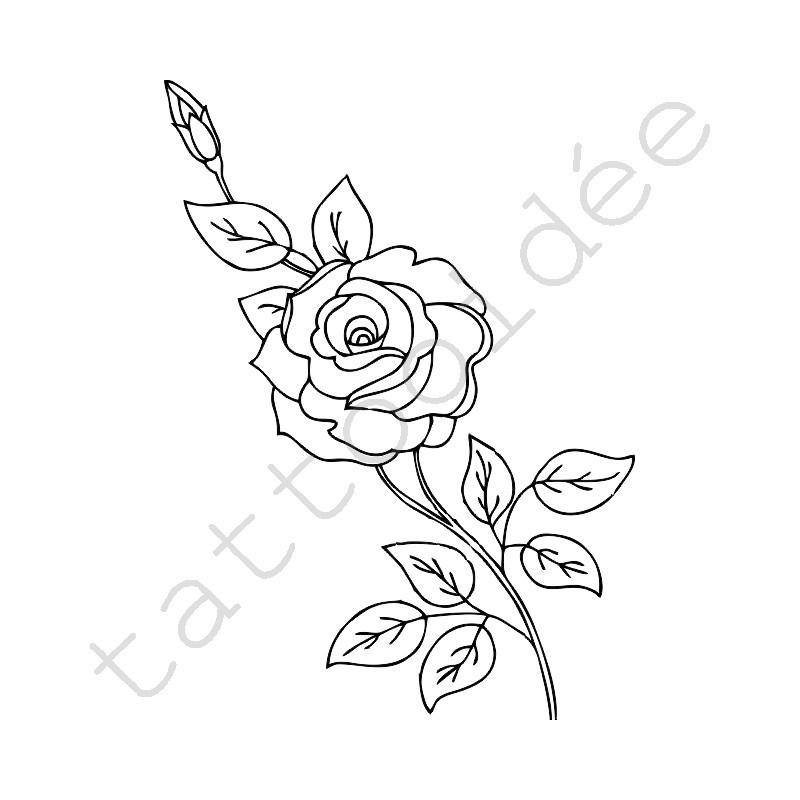 Róża 07