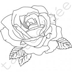 Róża 01